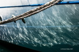 reflections,mircea,tall ship,tall ships race, alicante,sea fever