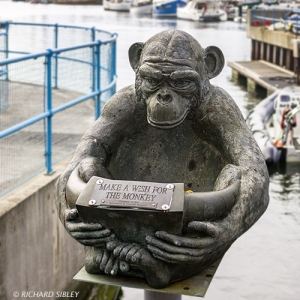 North Sea Regatta, Hartlepool Monkey