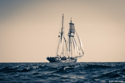 Dutch topsail schooner Wylde Swan underway RDV2017