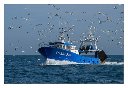 When the seagulls follow the trawler......?