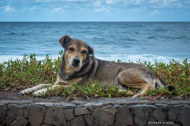Resting by the beach, Santo Antao