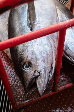 Tuna fishing a local industry